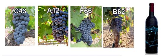 Cuatro fotos por una botella de vino blockchain.